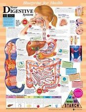 BLUEPRINT FOR HEALTH DIGESTIVE SYSTEM (LAMINATED) CHART (66x51cm) ANATOMICAL