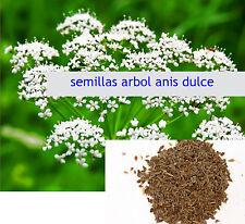 Semillas de Anis Dulce ( Pimpinella anisum ) seeds 3 gramos 600 semillas graines