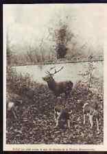 1928  --  ERMENONVILLE  HALLALI  SAINT HUBERT  F999