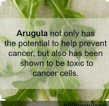 ARUGULA-1500 SEEDS -NON-GMO-Open Pollinated.