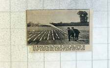 1921 Fire Brigade At Feltham Near London Helping Market Gardeners Save Crops