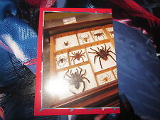 PANINI MARVEL SPIDER-MAN SPIDERMAN THE AMAZING 2014 STICKER IMAGE N° 19 mint