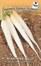 500 Semi/Seeds RAVANELLO Candela di Ghiaccio