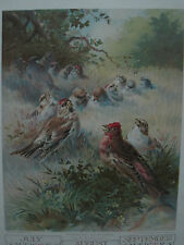 "ANTIQUE  LITHOGRAPH "" Morning Serenade"" BY H. Giacomelli CALENDAR PAGE 1907"