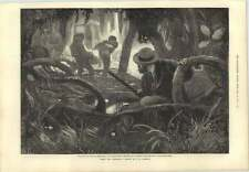 1873 Among The Mangroves Drawn By Vw Bromley