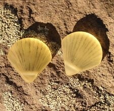 Sea Glass, LARGE Clam Shell Pendant Beads, Lemon Yellow ( 29x27mm), 2 pcs.