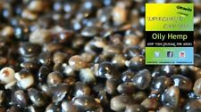 10kg OLEOSO Chili canapa COTTO delle particelle Spodmix CHILLI MIX di Canapa Carpa Corso