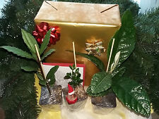 Black Friday, Christmas gift, rare Fruit Tree Collection, wrapped golden, card
