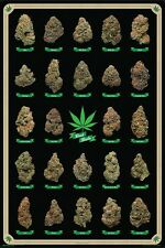 "BEST BUDS POSTER ""Marijuana Strains Identification Chart Weed Pot"" NEW Licensed"
