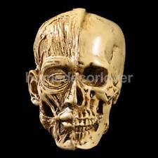 Resin Human Model Anatomy Skull Head Drawing School Figurine Decor Yellow