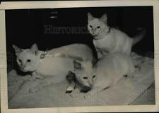 1948 Press Photo New York cat family entered in show of the Empire Cat Club NYC