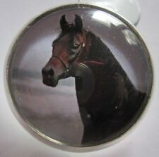 GLASS DOME PICTURE BUTTON OF A BEAUTIFUL DARK BROWN HORSE -- AWESOME!