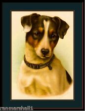 English Print Jack Russell Terrier Puppy Dog Head Art Vintage Poster Picture