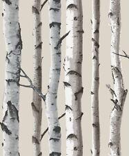 Fine Decor Birch Tree Wallpaper FD31051 - Photographic Forest Cream