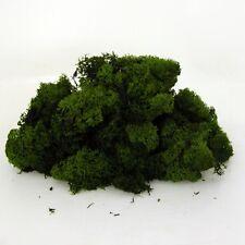 """""""Finlandia"""" Líquen De Los Renos seca preservado verde oscuro para manualidades"""