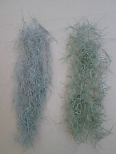 Tillandsia Usneoides - Spanish Moss, Old Mans Beard,Air Plant (2 different form)