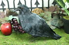 Furry Animal Feather Black RAVEN Crow Bird Taxidermy Horror Haunted Halloween