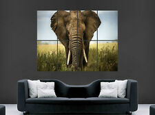 AFRICAN ELEPHANT POSTER WILDLIFE WILD SAFARI AFRICA  JUNGLE ART WALL LARGE