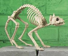 46cm Skeleton Poseable Kitty Cat Bones Halloween Party Decoration Horror Prop BN