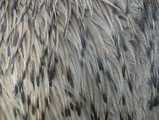 100-110 EMU FEATHERS-Various Lengths- Wedding, Jewelry, Fly Tying, Costumes