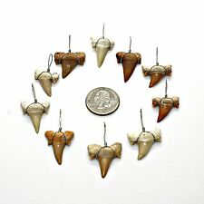 """10 Pcs LG 1"""" Grade 'A' Wire Wrapped Sharks Teeth Necklace Pendants Shark Tooth"""