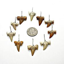 10 Pcs LG Grade 'A' Wire Wrapped Sharks Teeth Necklace Pendants Shark Tooth