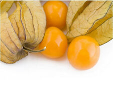 Fruit-cape Groseilliers-Giant-Physalis peruviana - 30 graines plus