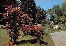 BR21894 La Roseraie du parc Vittel   france