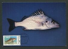 CISKEI MK FISCH FISH PECHE POISSON MAXIMUMKARTE CARTE MAXIMUM CARD MC CM d3375