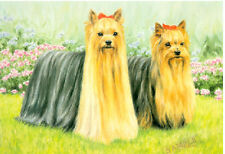 Yorkshire Terrier Double Trouble Limited Edition Art Print UK Artist Sue Driver