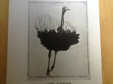 Vintage 1940s woodcut print Ostrich by Walther Klemm