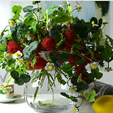 Christmas Home Furniture Decor 6set x 3 Branch Artificial Strawberry Fruit Plant