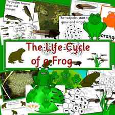 Life cycle of a Frog resource CD -display, games, life cycles, Spring, Science