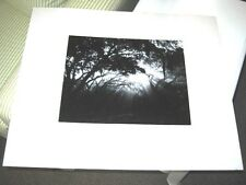 SEABROOK HULL SIGNED Photograph 1989 Quercus Virginiana The Live Oak Image #6