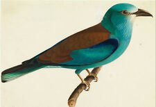 """perfact 36x24 oil painting handpainted on canvas """" a lovely bird """"@N3359"""