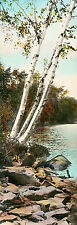 ANTIQUE Circa Ea.1900's Hand Colored Photo 3 BIRCH TREES BY WATER, Nutting Style