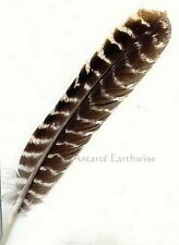 1 x BARRED FEATHER QUILL  Magical Writing Craft Wicca Pagan Witch Goth