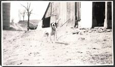 OLD PHOTOGRAPH 1930 MILL LAKE MICHIGAN COONHOUND COON HOUND HUNTING DOG PHOTO