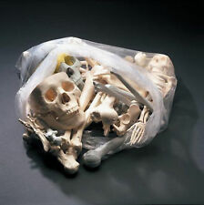 10lb Bag of Bones Bucky Skeleton Human Halloween Prop