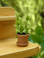 Miniature Dollhouse FAIRY GARDEN ~ Tall Green House Plant in Pot ~ NEW