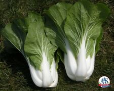 2500 PAK CHOI Bok Choy Chinese Cabbage Seeds, Comb S/H + Free Gift!
