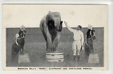 "BRONCHO BILL'S ""BABY"" ELEPHANT AND SHETLAND PONIES: Circus postcard (C16636)"