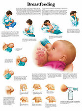 A3 Medical Poster - Breastfeeding (Text Book Anatomy Picture Pathology Doctor)