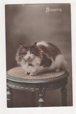 Napping, 1912 Ettlinger Cat Postcard, B371