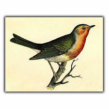 METAL SIGN WALL PLAQUE ROBIN BIRD Vintage Illustration Drawing art print