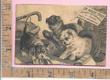 DR ROGERS SYRUP LIVERWORT TAR & CANCHALAGUA FOR COUGHS PUPPY HAT BOOK SHOE 0890