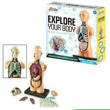 Grafix Explore your Body - Build & Learn Human Anatomy Model