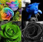 15 Rosen Samen verschiedene Farben regenbogenfarben und diverse Sets Rosensamen