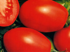 Tomato Rio Grande Large Fruit Flavor is Excellent A+ Canner 40+ SEEDS