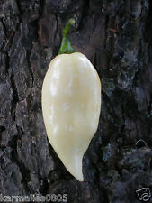 (10) WHITE BHUT JOLOKIA (GHOST PEPPER) SEEDS